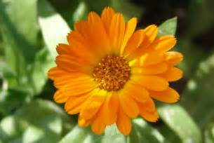 herbal remedy uses picture 1