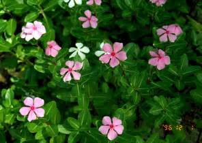 herbal cure for cancer picture 10