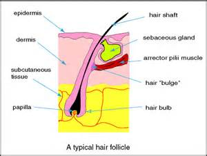does infrequent use effect hair folic picture 27