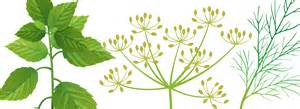 natural healing picture 9