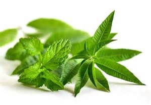 i herbal picture 5