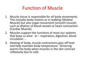 function of the cilary muscle picture 11