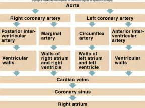 coronary blood flow picture 17
