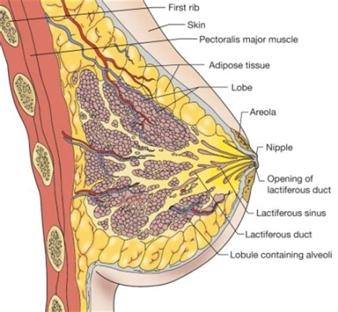 different types of skin cancer picture 9