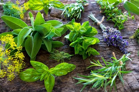 herb for blood flow picture 13