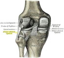 proxmal joint pain picture 6