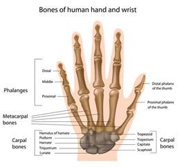 joint pain in wrist area radiating down mid picture 10