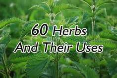 herbal medicine and their uses picture 2
