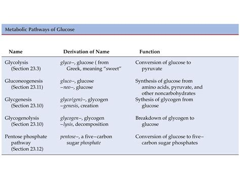 digestion of carbohydrates picture 6