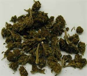 what does weed look like picture 6