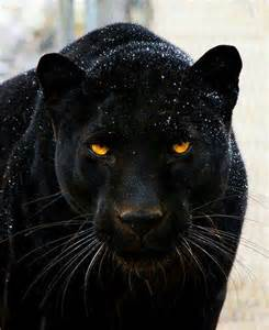 can girls take black panther pill picture 4