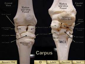 pictures of the knee joint with labels picture 4