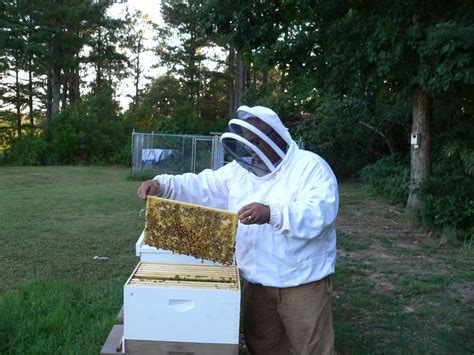 honey bees for sale in alabama picture 1