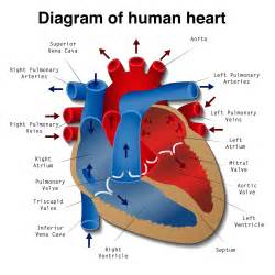 medical facts and diagram of how the blood picture 5