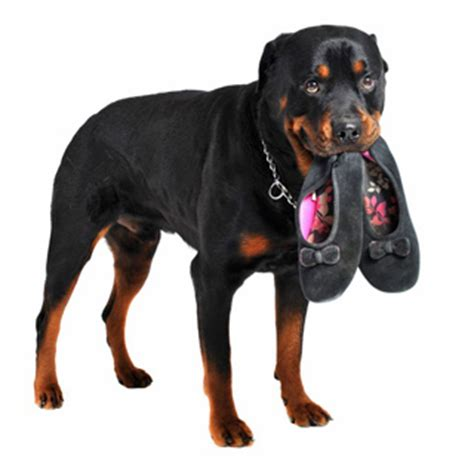 aging care for rottweilers picture 11
