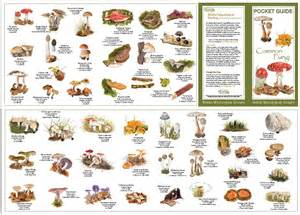 types of fungi picture 3