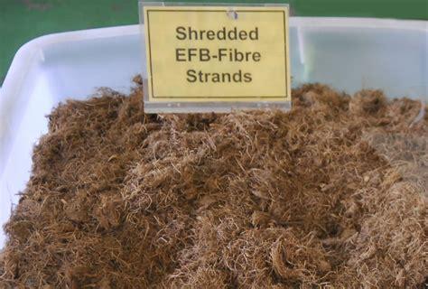 palm oil fiber colon picture 9