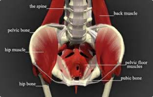 abdominal pain and bladder muscle pain picture 9