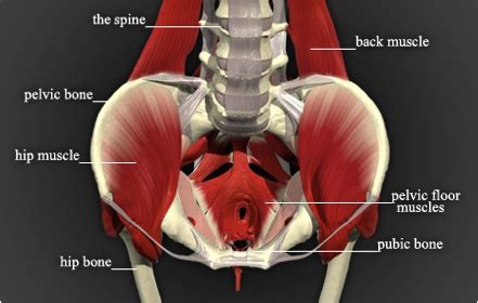 for pelvic muscle spasm picture 7