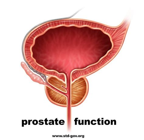 Purpose of the prostate picture 6