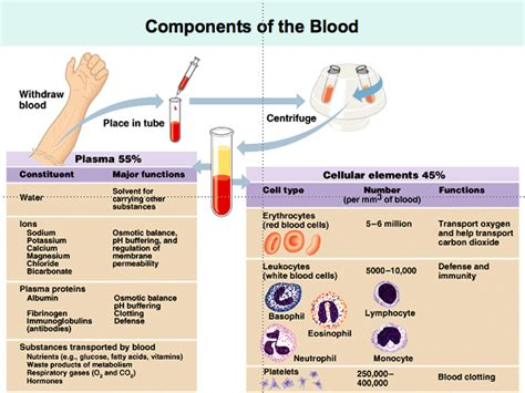 Physiology blood picture 2