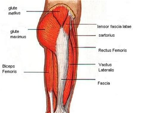 acupressure for pelvic muscle spasms picture 3