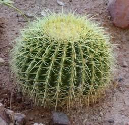 cactus picture 14