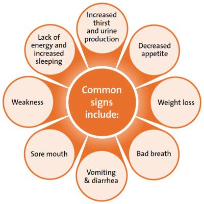 bladder cancer signs and symptoms picture 10