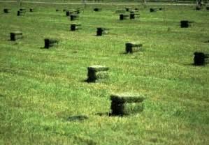 alfalfa hay in iowa picture 6