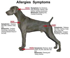 dog skin allergies picture 9