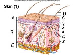 four protective functions of the skin picture 1