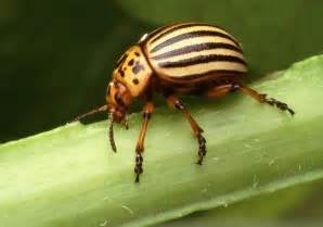 insect picture 5