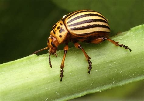 insect picture 6