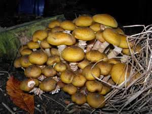 fungi mushrooms picture 10