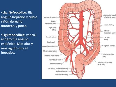 colon picture 3