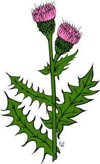 thistle graphics picture 7