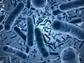 what is le cerbvas disease picture 13