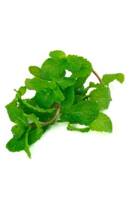 mint leaves for high blood pressure picture 2