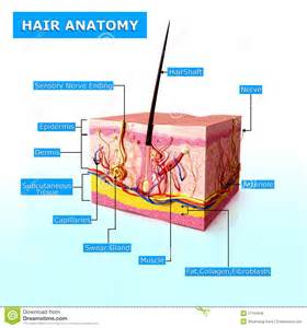 human growth hormone hair picture 3