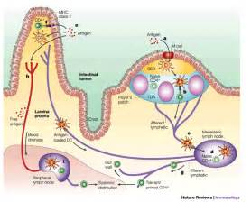 intestinal m picture 14