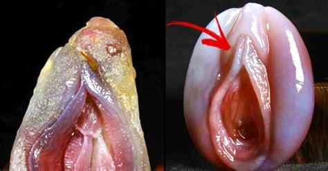 pics of vigina picture 1