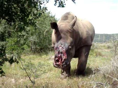 where can i buy rhino rush picture 4