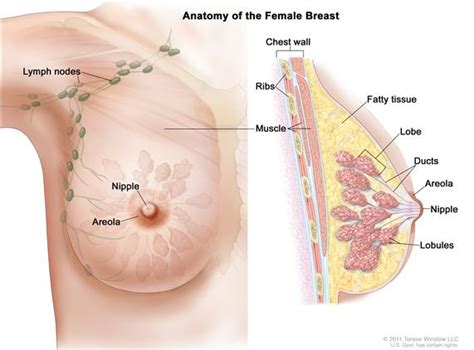 areola changes in skin both breast picture 6