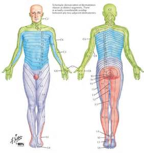 cause of muscle pain in thighs picture 13