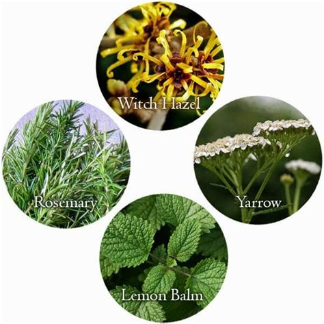 what herbs are used to tighten the skin picture 1