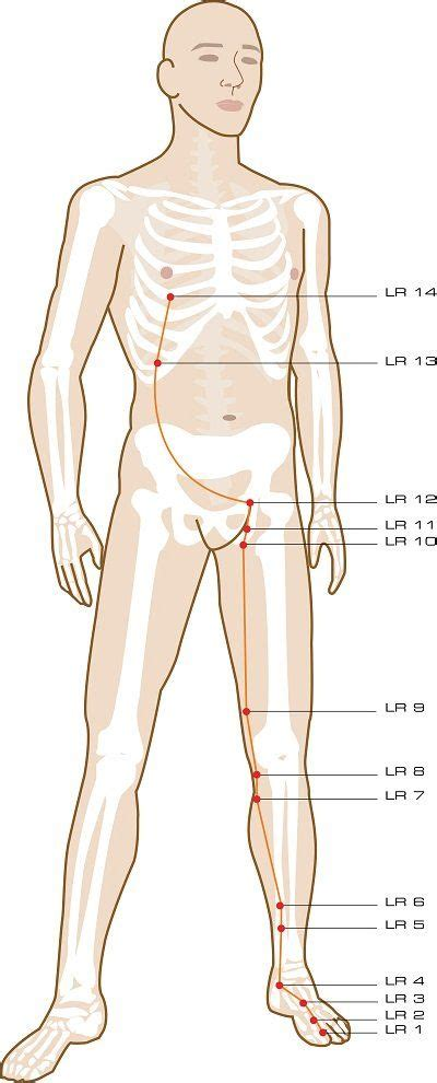 accupressure point for liver picture 6