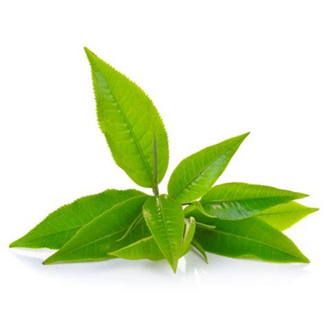 green coffee tea picture 1