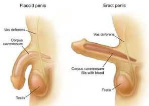 pennis health products picture 13