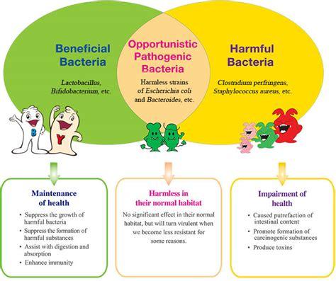 benefits of probiotics picture 6