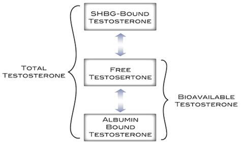 testosterone free vs bound picture 5